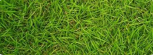 fertilization austins best lawns